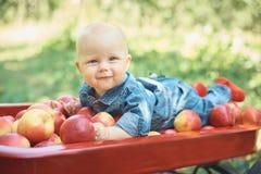 Muchacha con Apple en el manzanar Muchacha hermosa que come Apple org?nico en la huerta Concepto de la cosecha Jard?n, consumici? foto de archivo