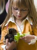 Muchacha con el conejillo de Indias imagen de archivo libre de regalías