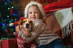 Muchacha con el enchufe Russel del perro más terier en casa con un árbol de navidad, Imagen de archivo libre de regalías