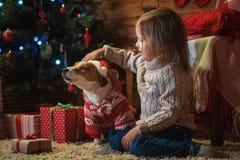 Muchacha con el enchufe Russel del perro más terier en casa con un árbol de navidad, Imagen de archivo