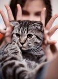 Muchacha con el gato de tabby lindo foto de archivo
