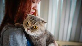 Muchacha con el gato del doblez del escocés Fotos de archivo libres de regalías