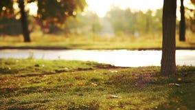 Muchacha con el perro de Labrador que camina en parque del otoño almacen de metraje de vídeo