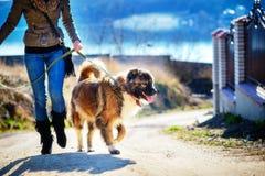 Muchacha con el perro de pastor caucásico, otoño Fotos de archivo