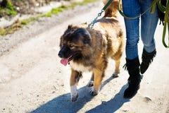 Muchacha con el perro de pastor caucásico, otoño Imagenes de archivo