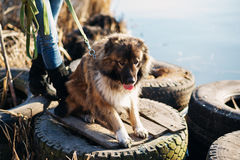 Muchacha con el perro de pastor caucásico, otoño Foto de archivo