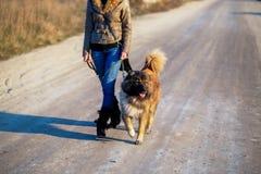 Muchacha con el perro de pastor caucásico, otoño Foto de archivo libre de regalías