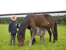Muchacha con los caballos Foto de archivo libre de regalías