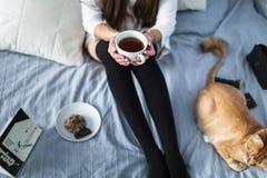 Muchacha con los calcetines calientes con una taza de té, gato, cierre el libro Fotografía de archivo