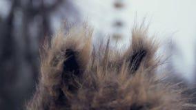 Muchacha con los oídos en los caminos del invierno de Chernóbil almacen de video
