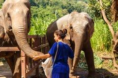 Muchacha con los plátanos en sus alimentaciones de mano un elefante en el santuario adentro Fotos de archivo libres de regalías