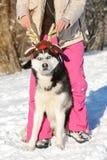 Muchacha con su perro esquimal lindo del perro en un paseo Imagen de archivo libre de regalías
