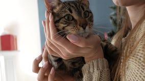 Muchacha con un gato por la chimenea Año Nuevo almacen de metraje de vídeo