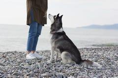 Muchacha con un perro en el fondo del paisaje del mar Pebble Beach imágenes de archivo libres de regalías