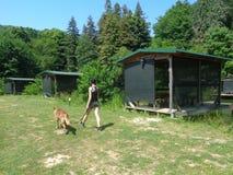 Muchacha con un perro en paseo del verano en el campo Foto de archivo