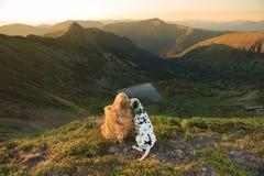 Muchacha con un perro que se sienta en una roca en el lago Foto de archivo