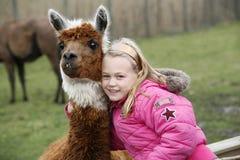Muchacha con una alpaca de la llama Foto de archivo