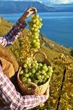 Muchacha con una cesta llena de uvas Foto de archivo