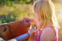 Muchacha con una vaca Imagenes de archivo