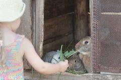 Muchacha curiosa que alimenta conejos nacionales con la hierba orgánica Fotografía de archivo