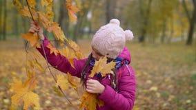 Muchacha curiosa que rasga las hojas de arce amarillas en otoño almacen de metraje de vídeo