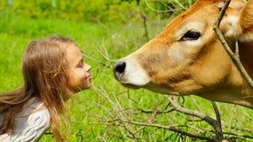 Muchacha de diez años sonriente con una vaca imagen de archivo libre de regalías