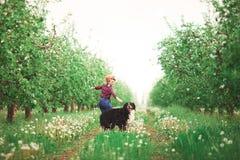 Muchacha de la mujer con el perro Berna en jardín de la primavera Imagen de archivo libre de regalías