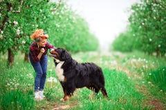 Muchacha de la mujer con el perro Berna en jardín de la primavera Imágenes de archivo libres de regalías