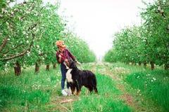 Muchacha de la mujer con el perro Berna en jardín de la primavera Fotografía de archivo libre de regalías