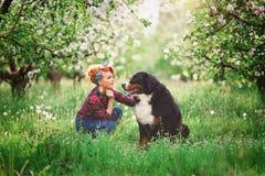 Muchacha de la mujer con el perro Berna en jardín de la primavera Fotos de archivo libres de regalías