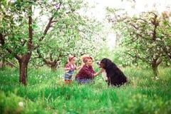 Muchacha de la mujer del bebé con el perro Berna en jardín de la primavera Imagenes de archivo