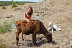 Muchacha de la vaca Foto de archivo libre de regalías