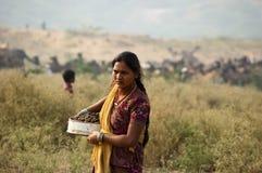Muchacha de Rajasthani que recoge el taburete del camello para utilizar éstos como combustible en casa Foto de archivo libre de regalías