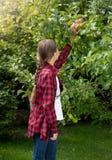 Muchacha de Teennage que alcanza para la manzana que crece en árbol en huerta Imágenes de archivo libres de regalías