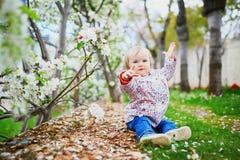Muchacha de un a?o cerca de manzanos en la plena floraci?n fotografía de archivo