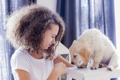 Muchacha del adolescente con un pequeño golden retriever Fotos de archivo