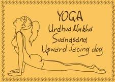 Muchacha del esquema en actitud ascendente de la yoga del perro del revestimiento Fotografía de archivo