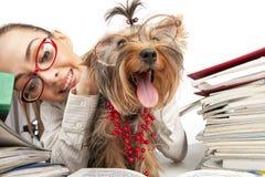 Muchacha del estudiante con el terrier de Yorkshire Imagen de archivo