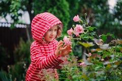 Muchacha del niño en el impermeable rayado rojo que juega con las rosas mojadas en jardín lluvioso del verano Concepto del cuidad Fotos de archivo libres de regalías