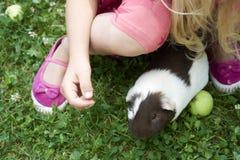 Muchacha del niño que se relaja y que juega con sus conejillos de Indias afuera en césped de la hierba verde Imagen de archivo