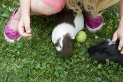 Muchacha del niño que se relaja y que juega con sus conejillos de Indias afuera en césped de la hierba verde Foto de archivo libre de regalías