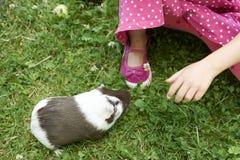 Muchacha del niño que se relaja y que juega con sus conejillos de Indias afuera en césped de la hierba verde Imagenes de archivo