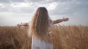 Muchacha del pequeño niño con funcionamientos hermosos largos del pelo a través del campo de trigo con las espiguillas de oro del almacen de video
