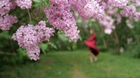 Muchacha delgada fuera del baile del foco en un vestido flojo entre los arbustos de la lila metrajes