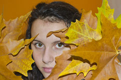 Muchacha detrás de las hojas del marrón del otoño Fotos de archivo