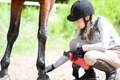 Muchacha ecuestre adolescente que comprueba para saber si hay lesión de la pierna del caballo de bahía Fotos de archivo libres de regalías