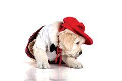 Muchacha elegante y elegante, roja del perrito foto de archivo libre de regalías