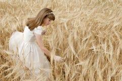 Muchacha en campo de trigo Foto de archivo libre de regalías