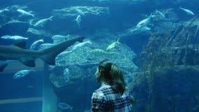 Muchacha en el acuario en la alameda de Dubai almacen de video