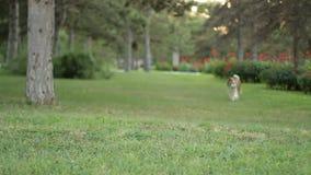 Muchacha en el adiestrador de perros del parque metrajes